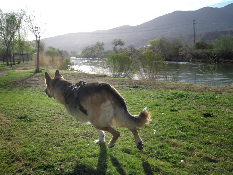 Running along the Rio Grande in T or C, New Mexico