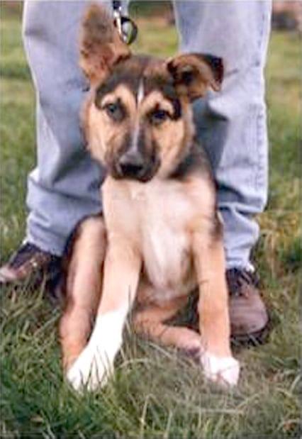 What a Pretty Puppy