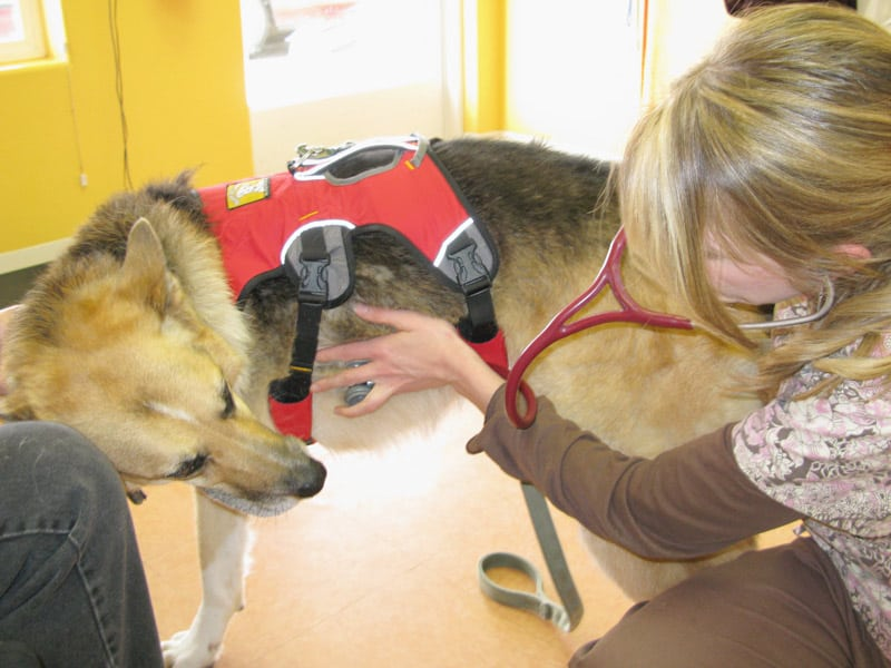 Dr. Mullins listens to lungs during dog cancer checkup