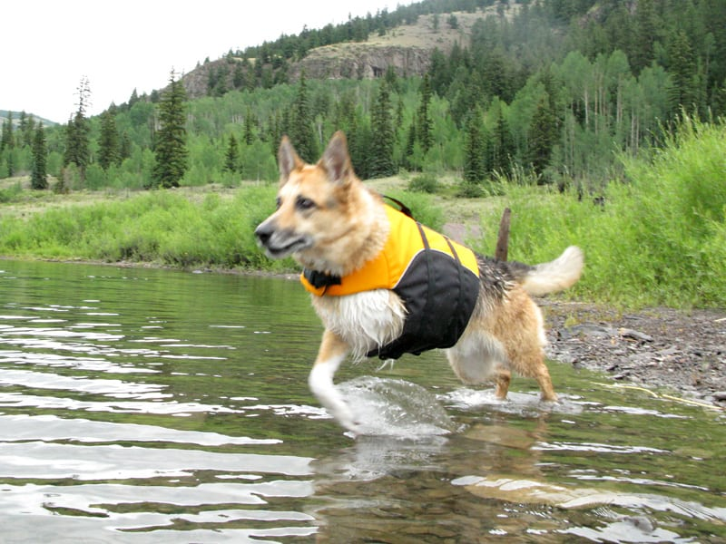 help three-legged dogs swim with float coat dog life jacket