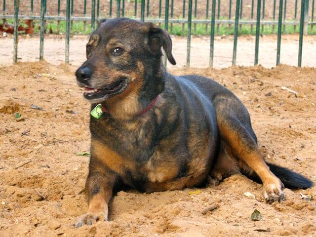 Three Legged Dog Pola from Israel