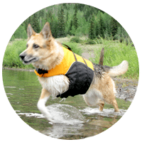 K9 Float Coat Helps Three Legged Dogs Swim