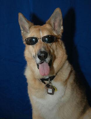 Too Cool Jerry Three-legged Superstar Dog